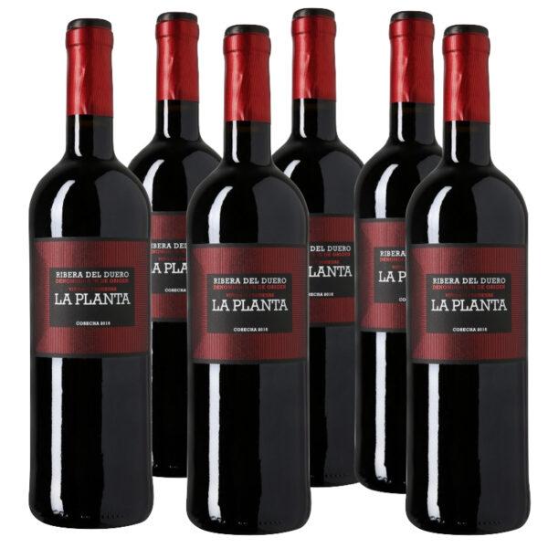 Lote 6 Botellas vino La Planta de Arzuaga